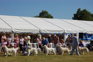 Golden Retriever Club of Scotland's Specialty Show